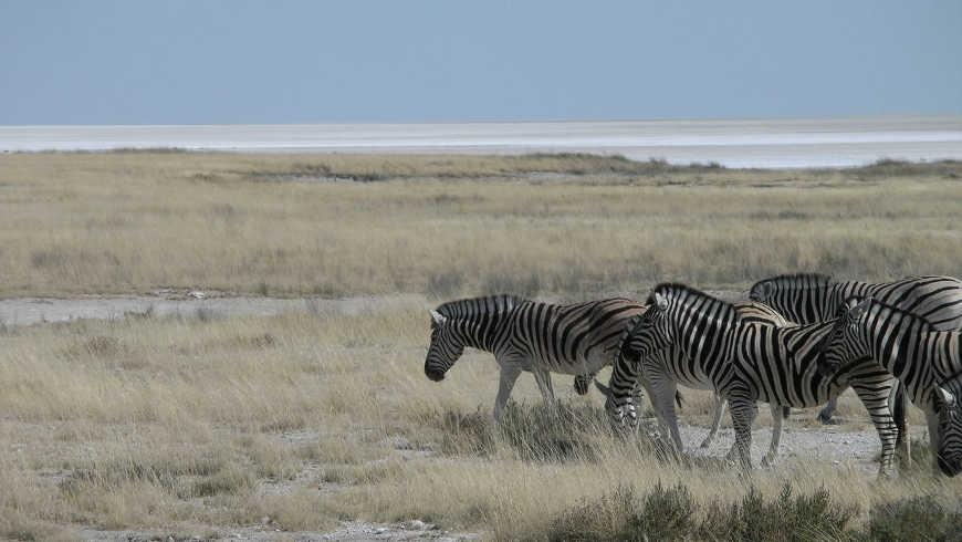 Safari in Namibië